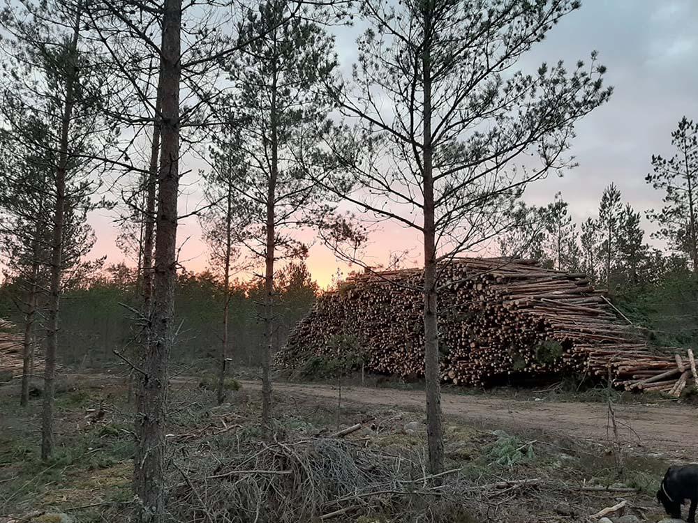 Föreningen för skogskultur Arsmote_Siv_21.01.2021